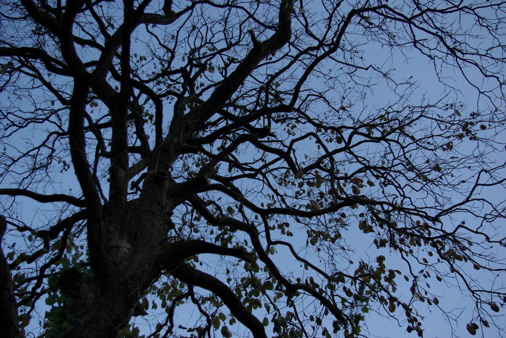 蒼い空 黒い木