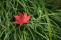 20091128 紅葉