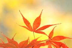 20091127 紅葉