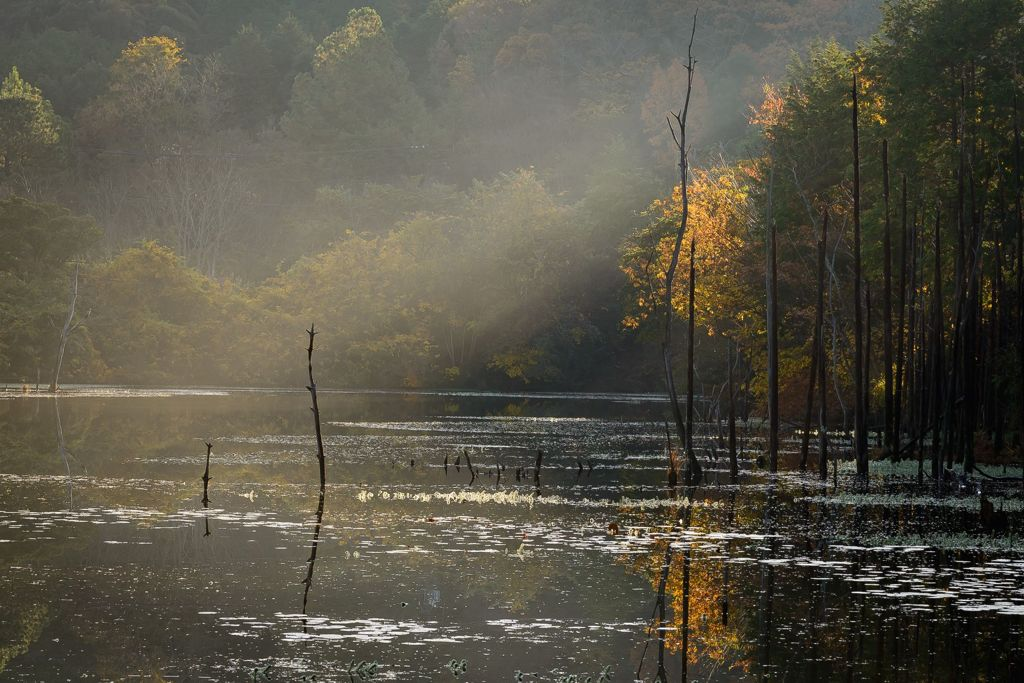 光芒のさす池