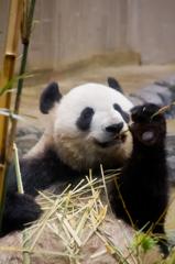 上野といえばジャイアントパンダ