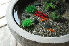 近江八幡/金魚