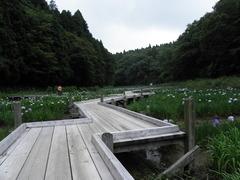 菖蒲園30