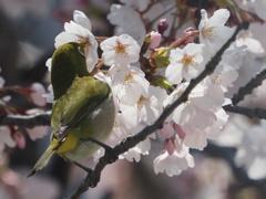 春のごちそう