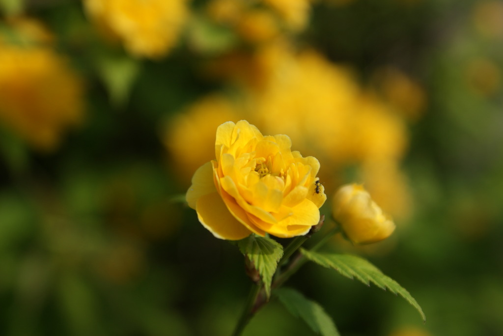 よそんちのお花