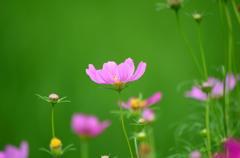 田んぼの畦道の花