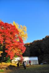見上げれば秋の見ごたえ