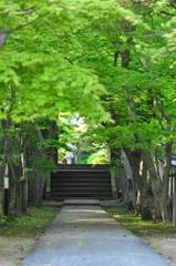 新緑の路(みち)
