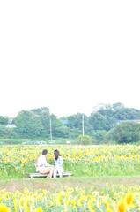 himawari(夢の中版)