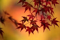 夢見るは秋の影