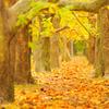Narrow colored avenue