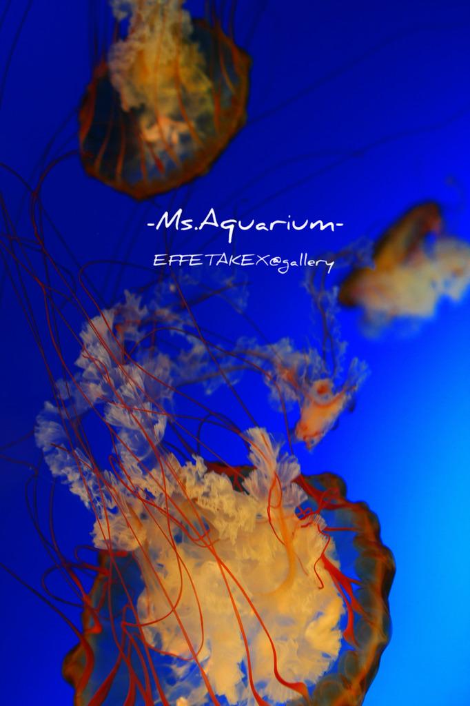 Ms.Aquarium