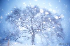 春待雪桜1