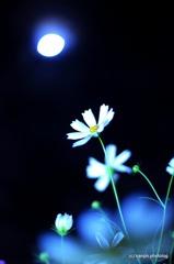 月夜の晩に・・