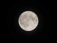 Pisa full moon