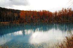 青い池と紅葉