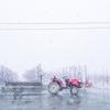 春の雪・・・♪♪
