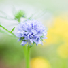 20210524 Blue Perfume・・・♡