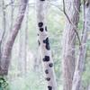 20201016 パンダの樹・・・(^^♪