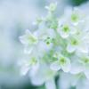 紫陽花 collection ♡ 2020-04