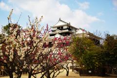 梅と松山城