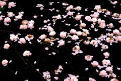 Lake of Rose