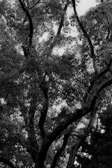 木 モノクロ