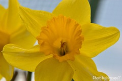 Spring color is yellow