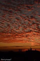 IMG_5683輝く鱗雲No2