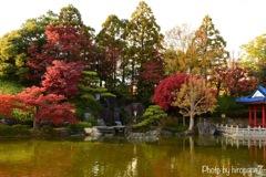 庭園の秋③