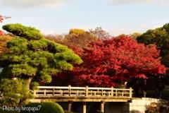 庭園の秋②