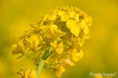 黄色い世界