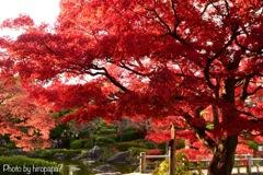 庭園の秋④