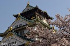 大阪城とサ・ク・ラ