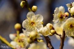 春への序奏