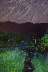 飛鳥川の蛍