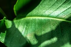 涼しげな緑 2