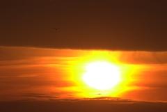 夕日と鳥 3