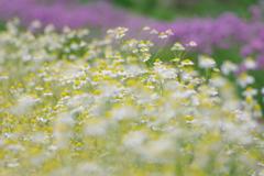 花いっぱい4