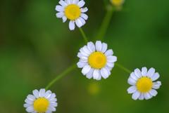 花いっぱい2
