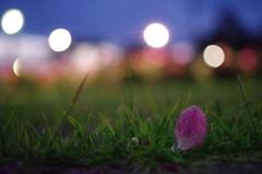 光と薔薇1
