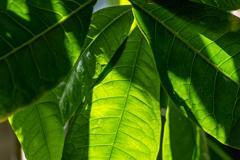 涼しげな緑 1