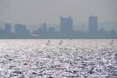 甲子園浜のwindsurfing1