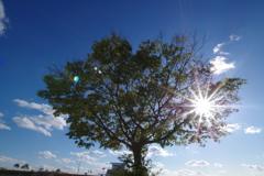 青空と木2