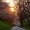 桜の思い出 4