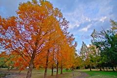 紅葉公園5