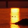 沈む夕日 4