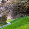 桜の思い出 3