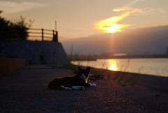 夕日とねこ2