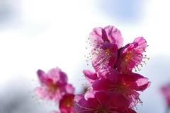 春はもうすぐ2